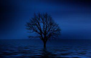 tree-738816__340